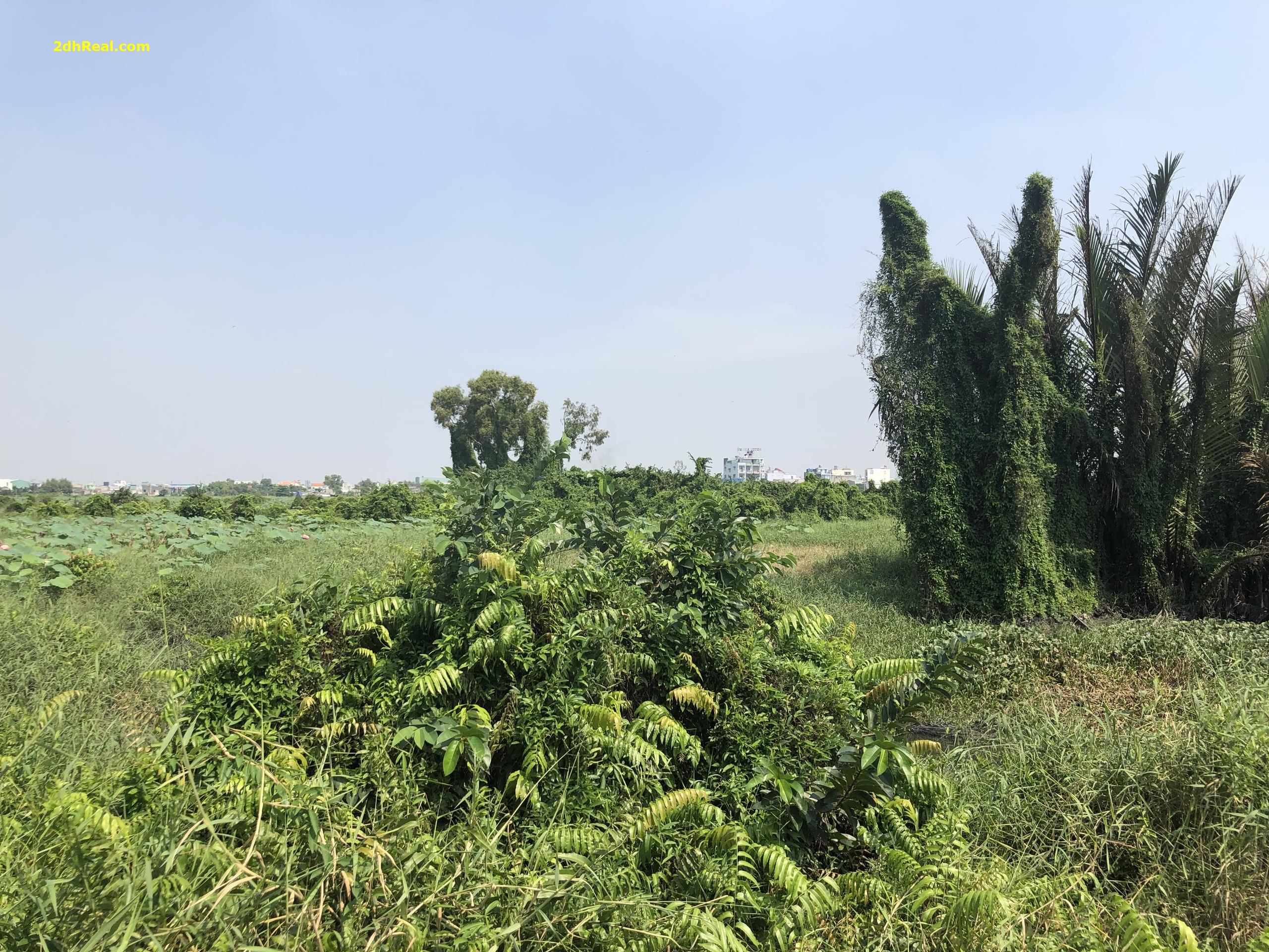 Chuyển nhượng dự án 47 ha phường Bình Trị Đông B, quận Bình Tân